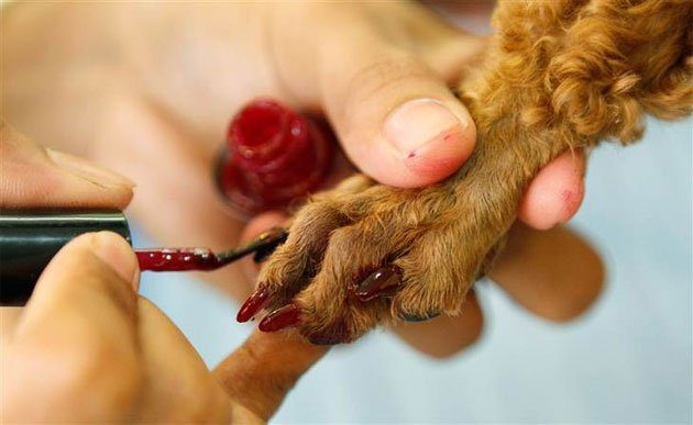 Nail Polish for Dogs Erik De Castro / Reuters /